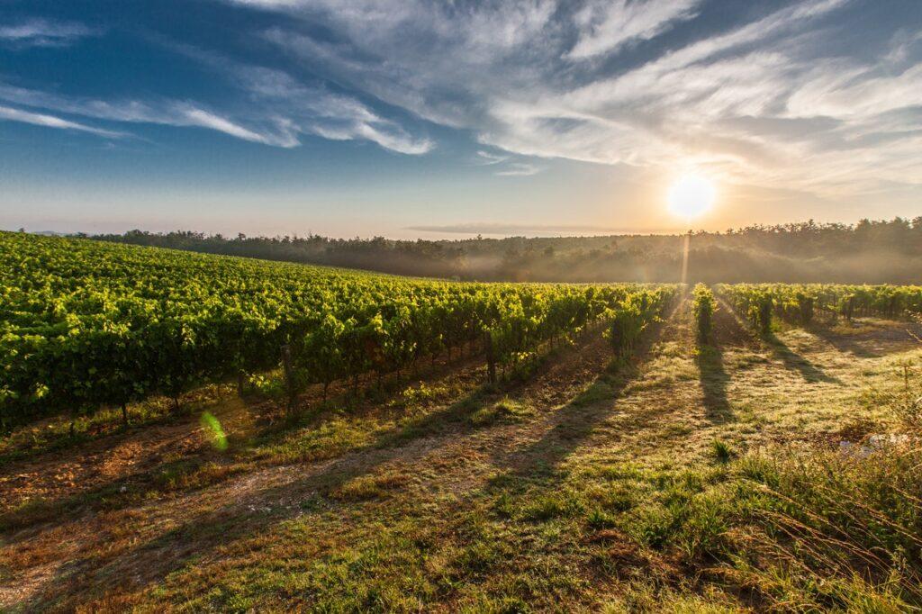 Vignobles du Languedoc